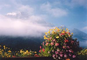 View of misty Rübli with bright flower pot