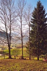 four trees foregrd, automn colours, Saanen vallee backgrd?