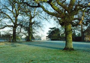 Oak trees near Center, School