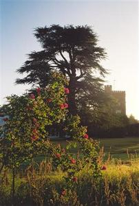 Rising sun on rose bush, Cedar school and tower