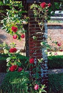 Red roses near brick pillar