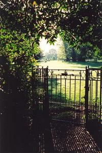 Grove gate and leaves against the light, very bright light in horizon, one sheep
