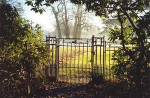 Grove gate and leaves against the light