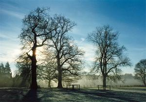 Trees against sunrise in a light mist