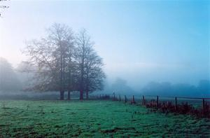 Morning mist in fields