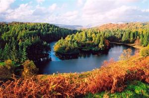 Lake surrounded by Forest and with island, dried ferns in the foregrd, beautiful falll colors