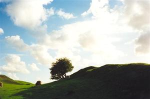 Green field and small round tree against light, sheep, cloudy blue sky