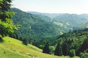 Black Forest wooded hills