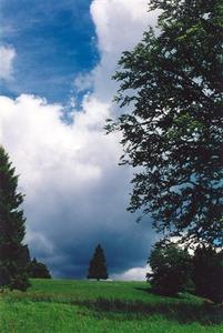 Trees, clouds, bit of blue sky