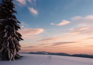 Pink and blue pastel sky over ski trail and tree