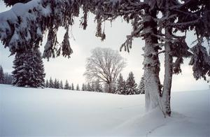 Snow covered trees  [best album]