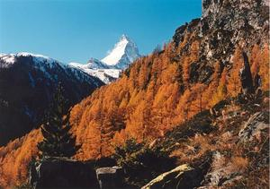 Matterhorn behind orange larch forest