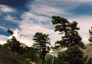 Matterhorn through trees
