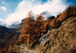 Path with larch trees, mountains