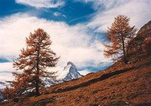 Matterhorn and two larch trees
