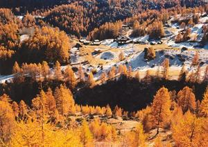 Larch forest and small village
