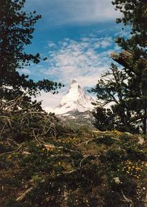 Matterhorn and blue sky through green foliage