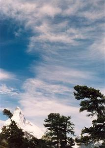 Matterhorn with larch trees and cloudy blue sky