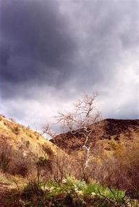 Bare tree on dried out hills, heavy clouds