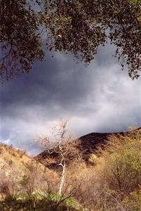 Bare tree on dried out hills, heavy clouds, foliage at the top