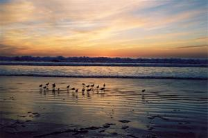 Birds on the beach at sunset, waves