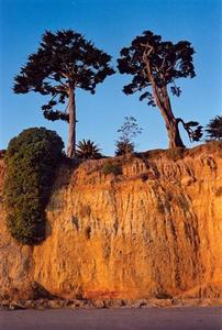 Cliff with two trees