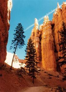 Bryce Canyon, from inside with trees