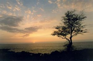 Sunset over ocean, bare tree on the coast