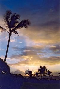 Palm trees and sun rays by the coast at sunset