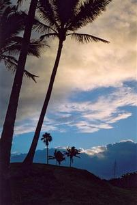 Palm trees and clouds after sunset