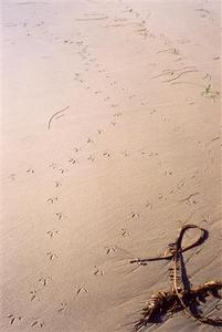 Bird 'foot prints' on the sand