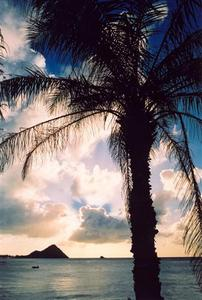 Back lit palm tree, sun behind clouds, Sta. Lucia