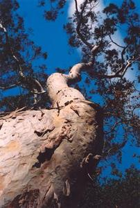 Winding tree trunk against blue sky