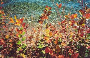 Close up of shore plants with colourful leaves