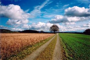 Path towards tree, coulourful fields and cloudy sky