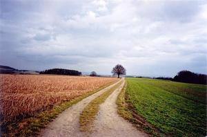 Winding path towards treebetween fields, grey sky