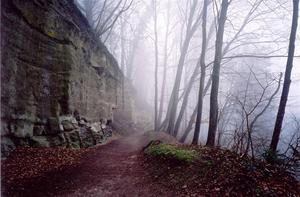 Path along cliff a thru misty forest