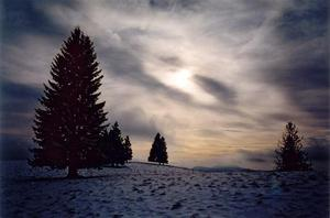 Evening sun thru winter clouds, pine trees and snow