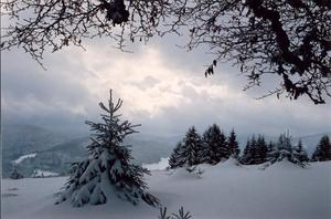 Clouds and snow covered mountains, black forest