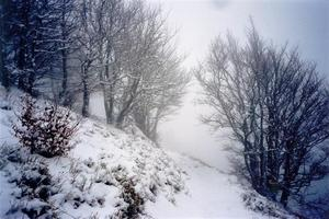 Snow covered path and trees in the mist