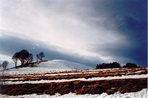 Snow, field and grey sky