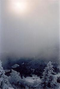 Hazy sun and snow covered forest thru fog