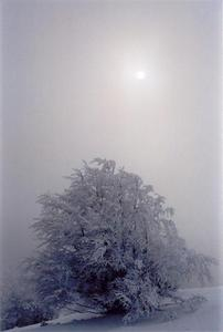 Hazy sun and snow covered tree