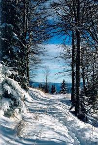 Blue sky view behind snow covered path thru forest