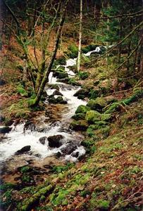 Stream thru forest and mossy rocks