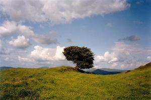 Single tree in meadow, grey clouds on blue sky