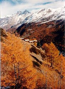 Houses and orange forest under mountains, Zermatt