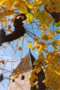Tower roof thru yellow leaves, blue sky, Rolle