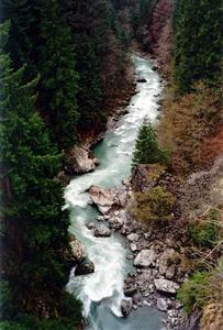 View of narrow mountain stream and trees from above