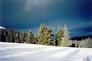 Pine trees behind snow covered hill, dark blue sky